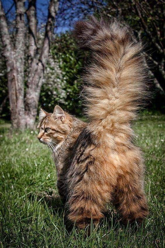 Animal; Pet; Cat; Family Member; Kitten;Pet Cats Photography; Cute Cat;Obese Cat; Tabby Cat; Shorthair Cat; Longhair Cat;Persian Cat; Fold Cat