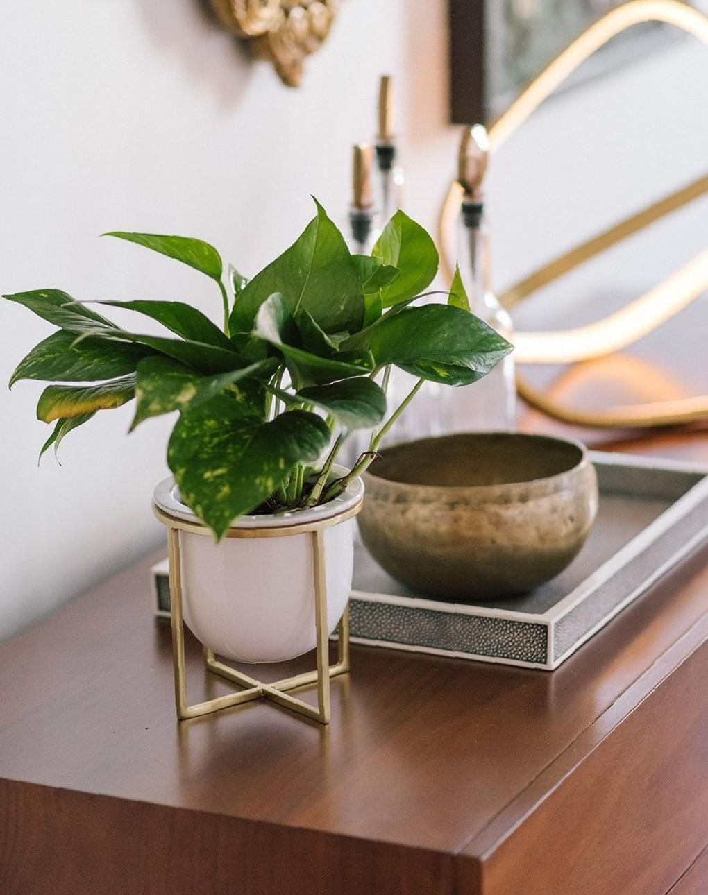 Gorgeous Indoor Plants Idea Images for Decoration - Page 2 of 8 - Guide19 Blog