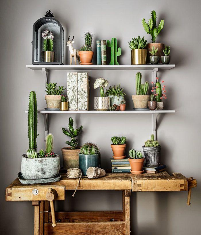 50 DAZZLING YET BEAUTIFUL CACTUS POTS - Breyi