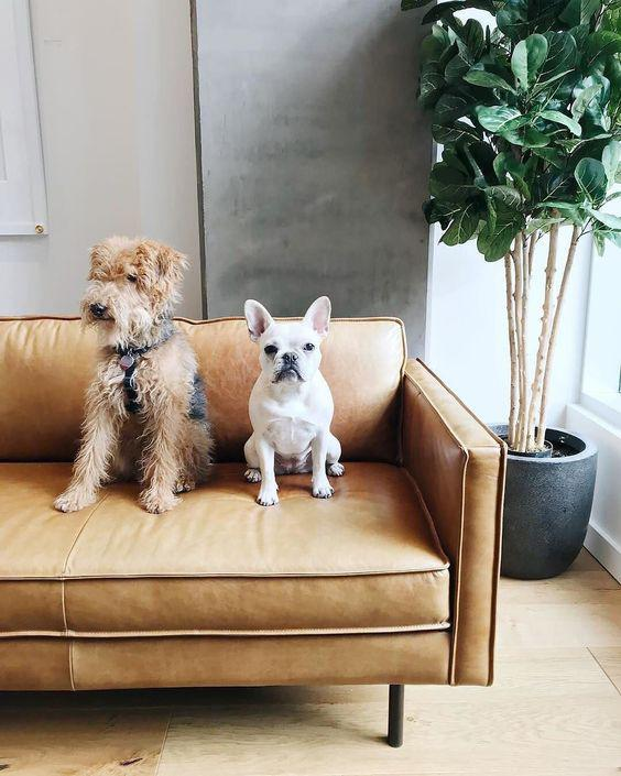 LEATHER SOFAS DO NOT HARBOUR DUST MITES OR PET FUR - Page 11 of 59 - Breyi