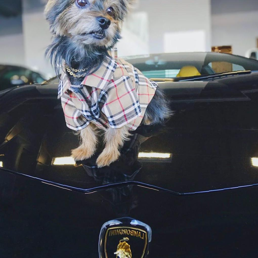 35 Clothes Which Make Your Pet Shine All Over the Street - SooAnt