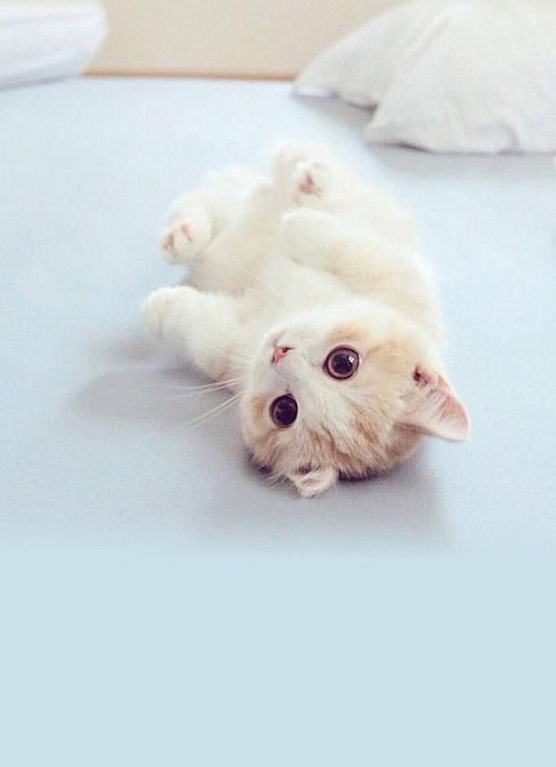 Soft and cute kittens, these mobile wallpapers are so cute! - kkcamille