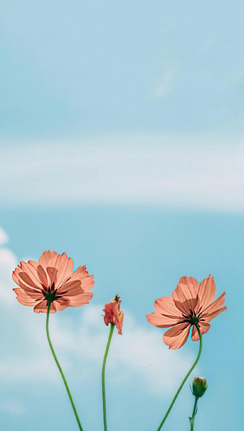 Beautiful flowers mobile wallpaper, super nice! - kkcamille