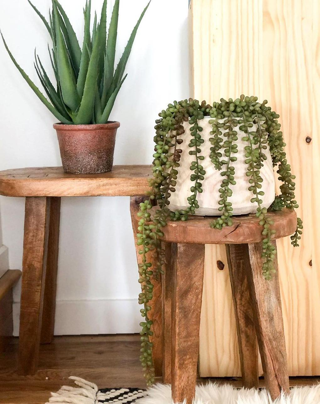 Gorgeous Indoor Plants Idea Images for Decoration - Page 6 of 8 - Guide19 Blog