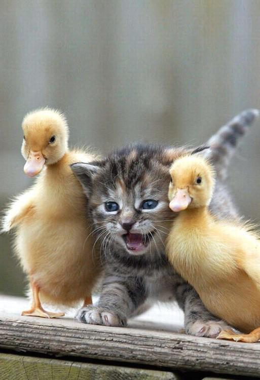 37 Cute And Furry Animals You Really Want One - JimIamy